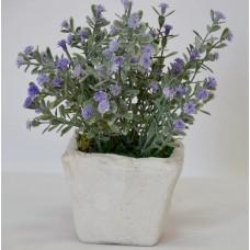 Цветы в вазонах  SU221