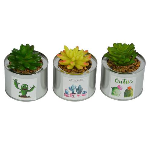 *Цветы в вазонах SU505