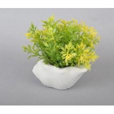 Цветы в вазонах (Ракушка) SU2856
